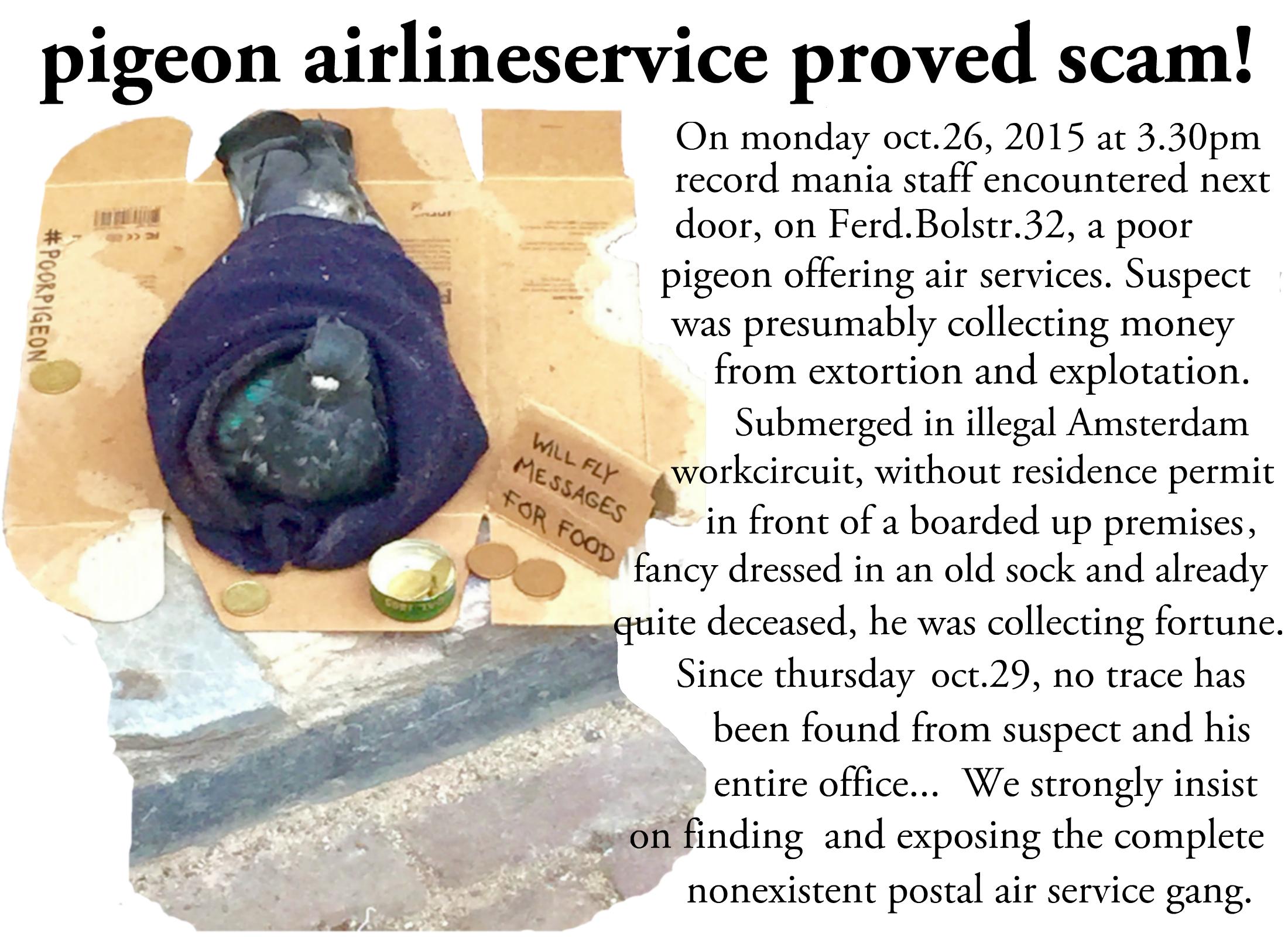 poor pigeon